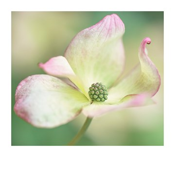 - Sterktekaart-Blanco-met-bloem-Polaroid