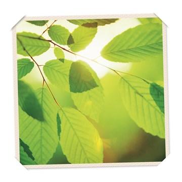 - flash-groen-blad