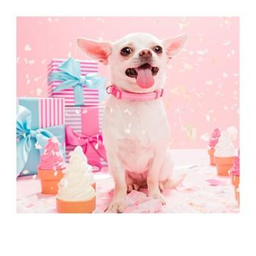 - Verjaardagskaart-vrouw-Cupcakes-en-chihuahua-hondje-Polaroid